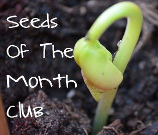 Seeds-of-the-month ad