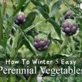How To Winter 5 Easy Perennial Vegetables