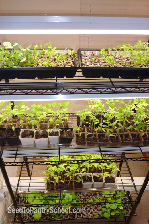 building-a-seed-growing-rack