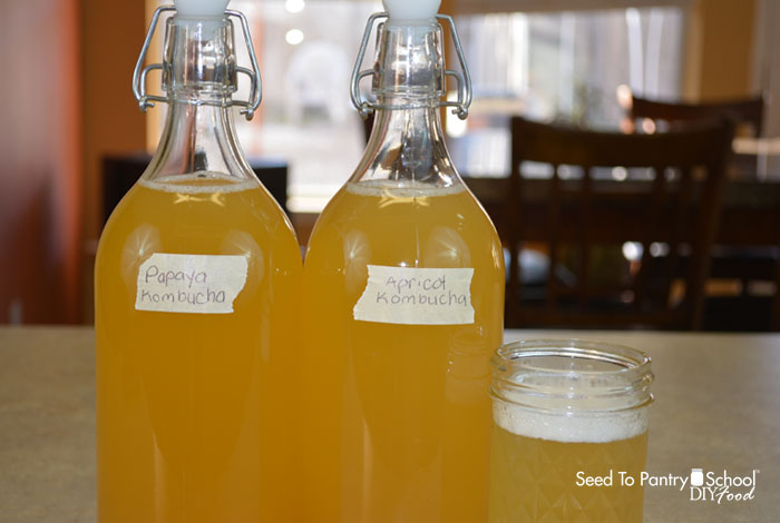 how-make-kombucha