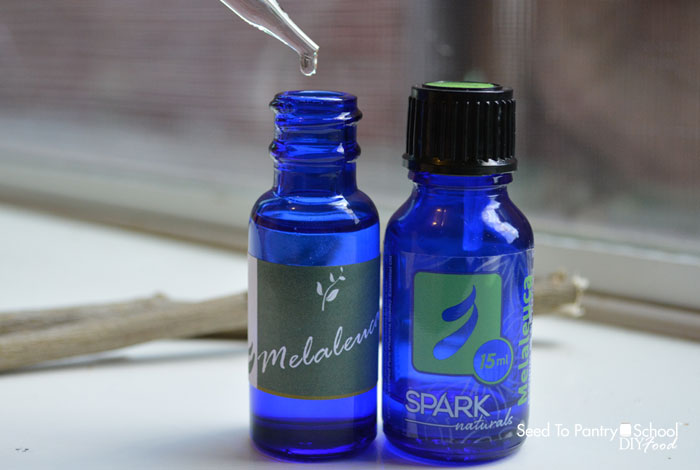 spotlight-essential-oils-melaleuca-oil-tea-tree-oil