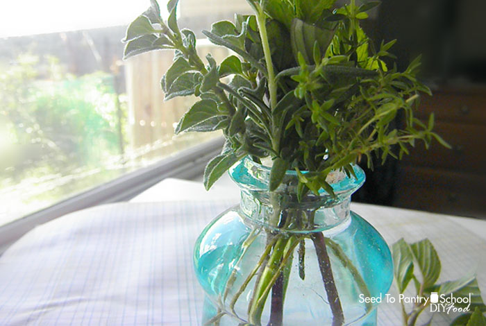 how-to-grow-herbs-fast-for-almost-free