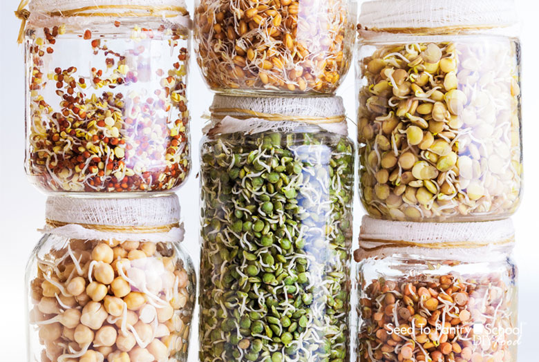 add-healthy-sprouted-seeds-to-your-diet