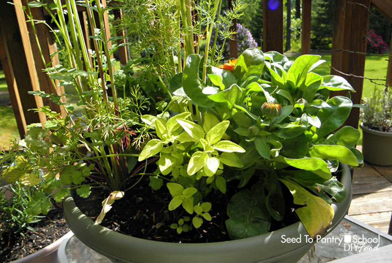 grow-your-own-food-in-a-container-garden