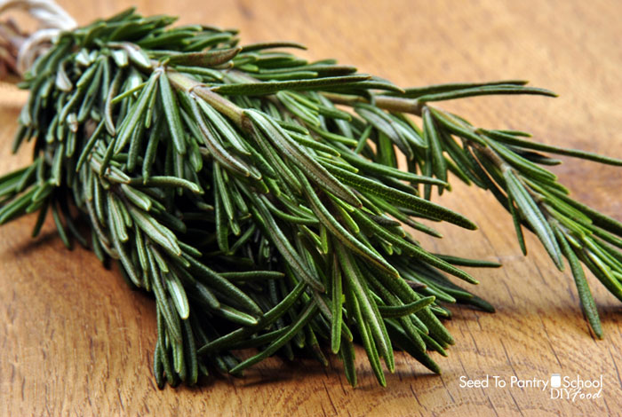 grow-use-rosemary