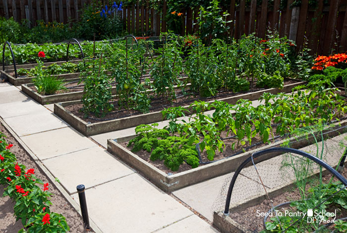 tips-on-how-to-build-and-maintain-raised-beds
