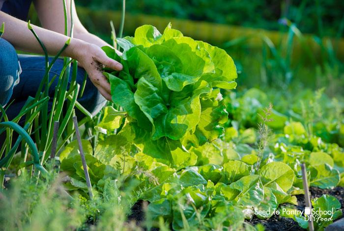 14-gardening-hacks
