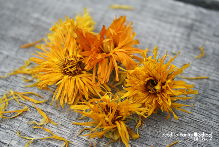how-to-grow-and-use-calendula