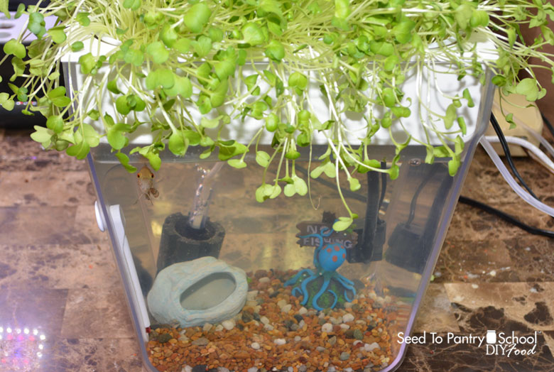getting-started-aquaponics