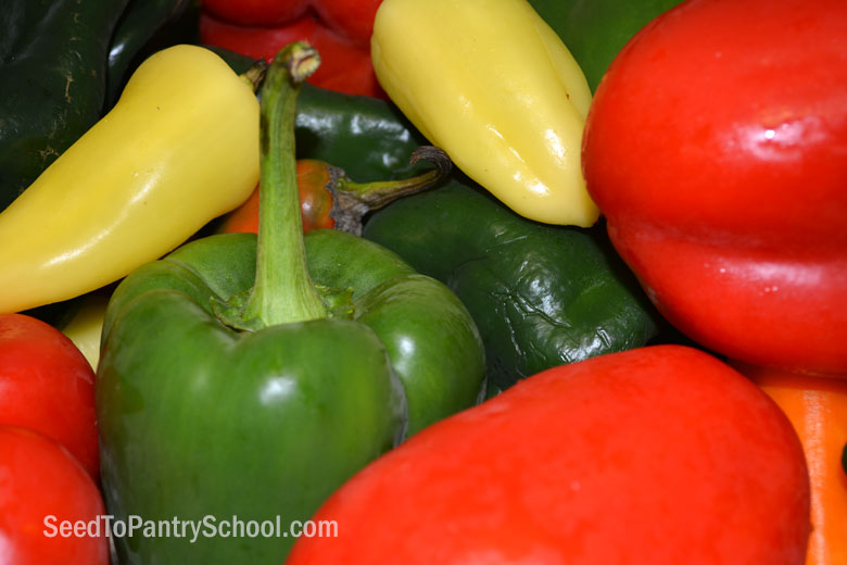 dehydrate-peppers-plus-making-pepper-powder