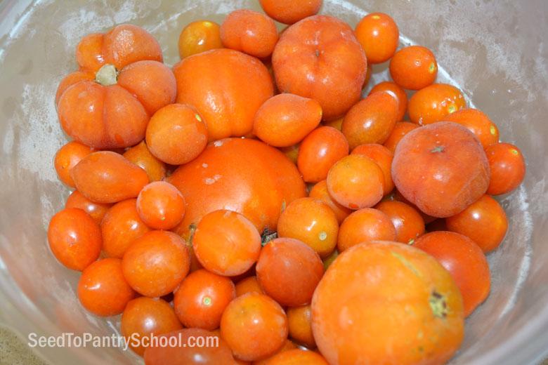 dehydrate-tomatoes-plus-making-tomato-powder