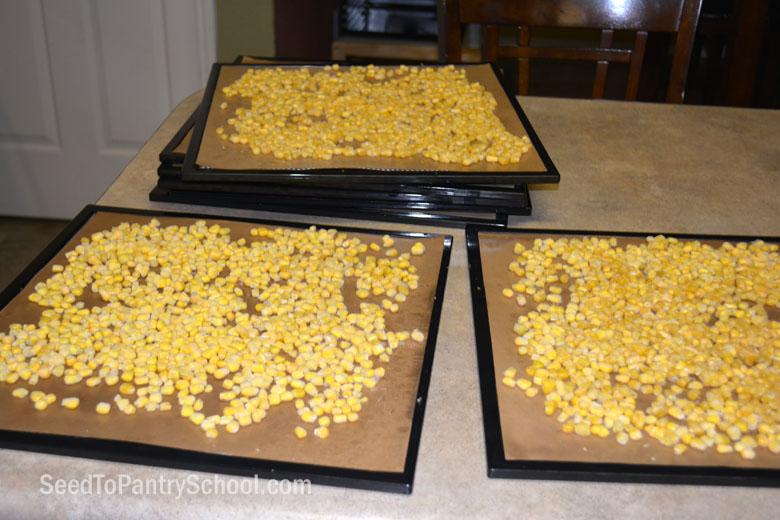 dehydrate-corn-tips-cutting-cob