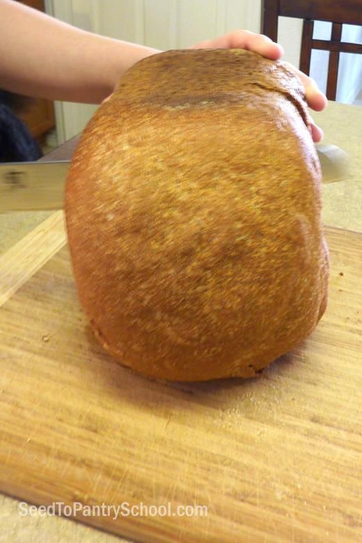 fresh-ground-whole-wheat-bread-for-a-bread-machine