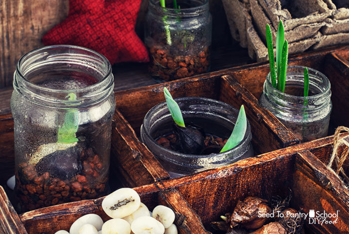 10-garden-starting-tips
